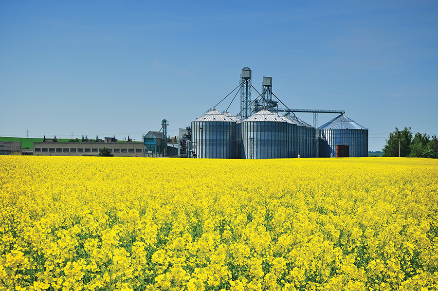 Canola Oil Processing Facility